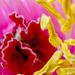pünkösdi fa virága