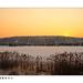 Omszki tó 1
