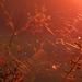 Pókháló a naplemente fényében