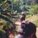 Elefánthát