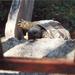 Zita, a teknős