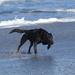 Jalama Beach, CA