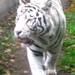 Nyíregyháza_állatpark