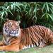 Szumátrai