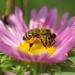 Méhek színek - 6
