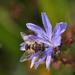 méhes katáng