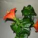 növények 037
