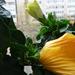 növények 013