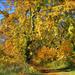 Az ősz színei No 004
