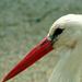 Gólya gólya