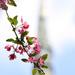 Virágtorony