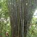 Bambooo Kuala Lumpur