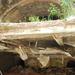 DSC 5554 Szakad a plafon