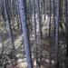 Fenyőerdő felülnézetben