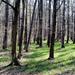Áprilisi erdő