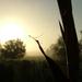 ködös nyári reggel