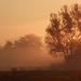 Reggeli köd