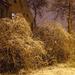 20071215.havazas.03