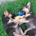Sunny & Bosco kicsiben