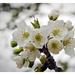Virágok és fehérség
