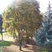 Ősz Bogácson