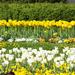 tavasz a Lánchídnál