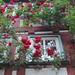 rózsakert az ablakban