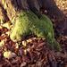 őszi színek, barna és zöld
