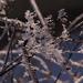 téli képek, fagyos csillanások
