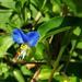 különleges növények, izgalmas kicsi kék