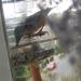 madarak, az etetőben